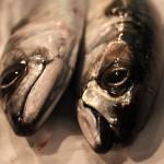 Fakta om fisk og skalldyr